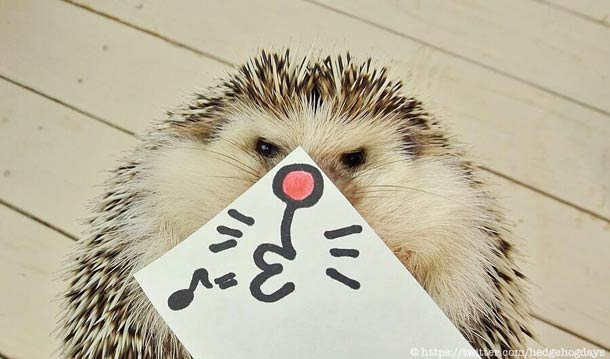 Japanese-hedgehog-marutaro-2