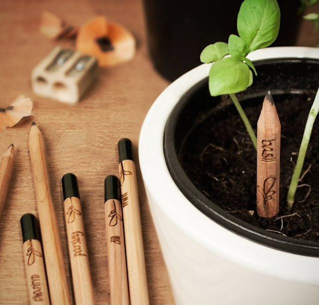 Sprout-A-Pencil-That-Grows-1