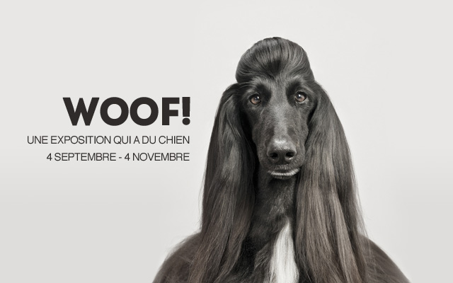 woof photographie chien sakura
