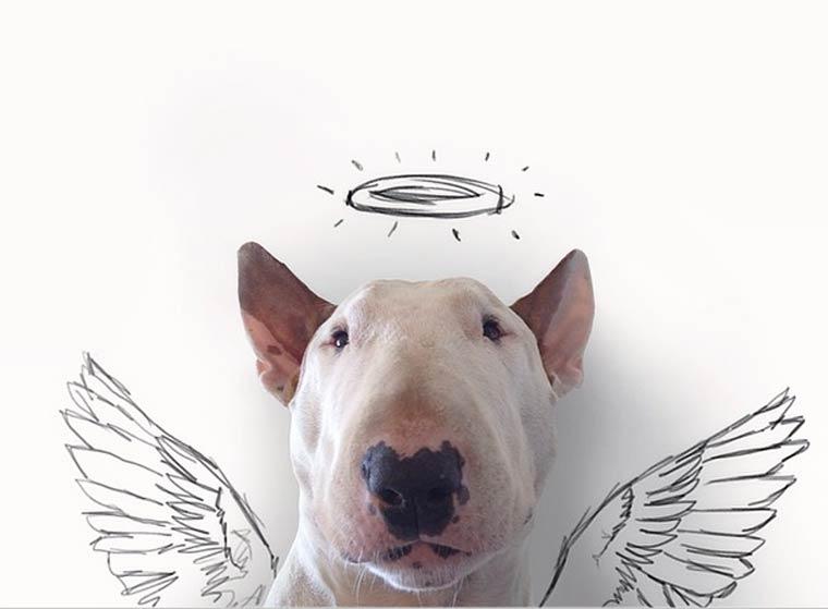 img-3rafael-mantesso-bull-terrier-1