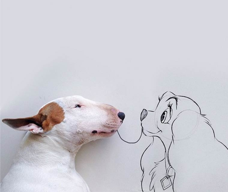 img-rafael-mantesso-bull-terrier-11