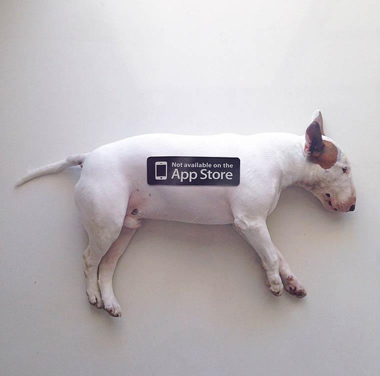 img-rafael-mantesso-bull-terrier-16