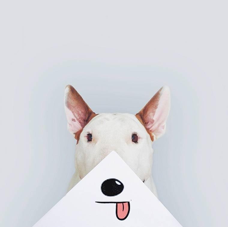 img-rafael-mantesso-bull-terrier-18