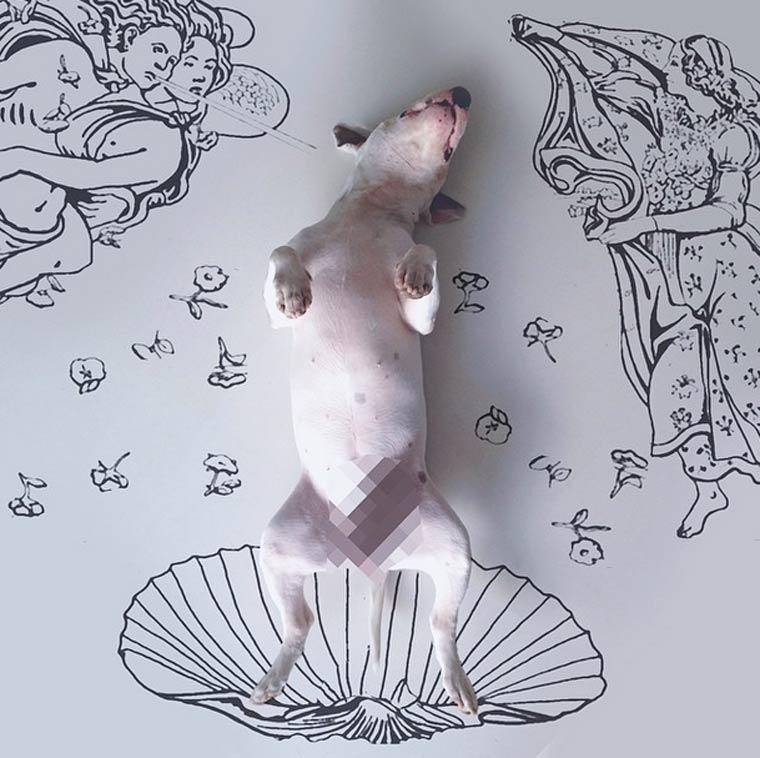 img-rafael-mantesso-bull-terrier-6