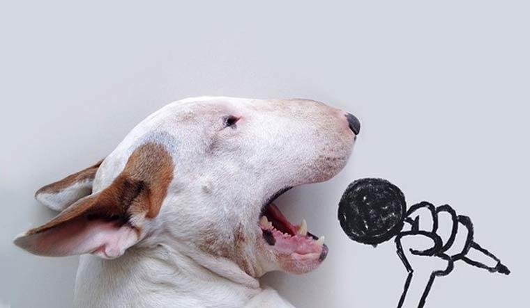 img1-rafael-mantesso-bull-terrier