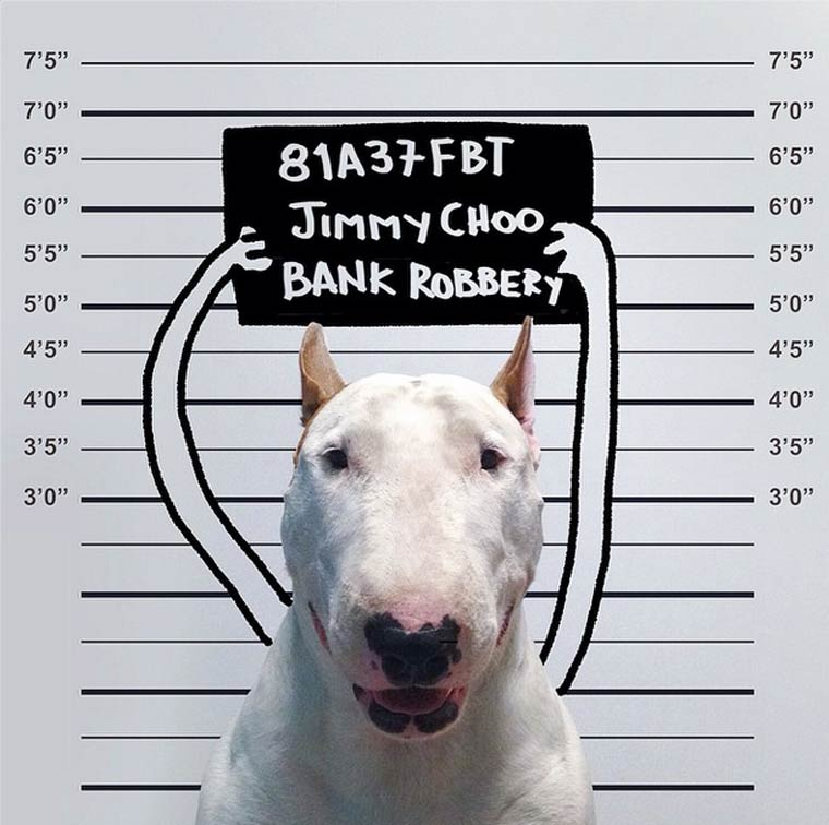 imh-afael-mantesso-bull-terrier-3