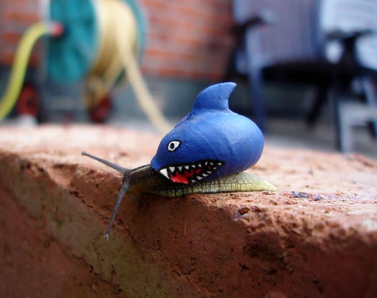 Snailshark