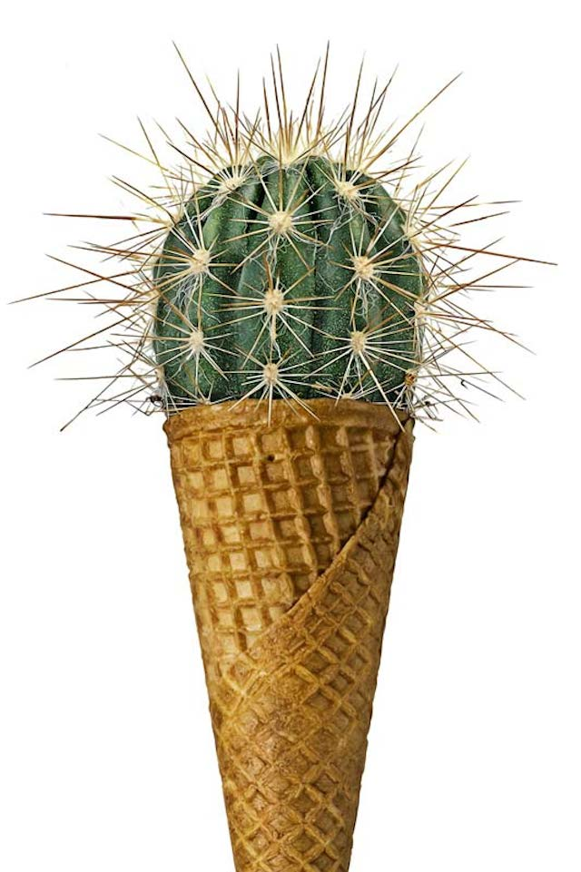 cactus-glace-Improbable-items-4