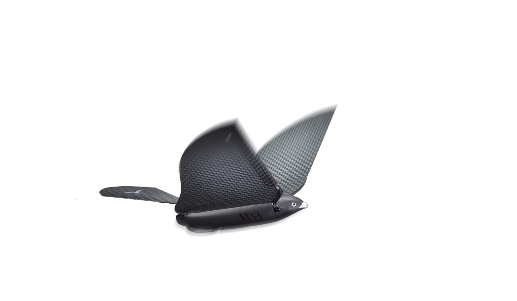 SLIDES-BIRD-CHAT