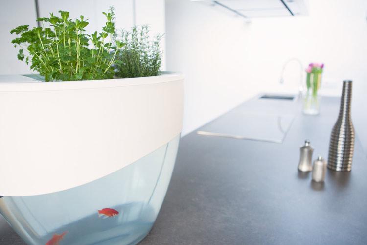 vegua aquarium
