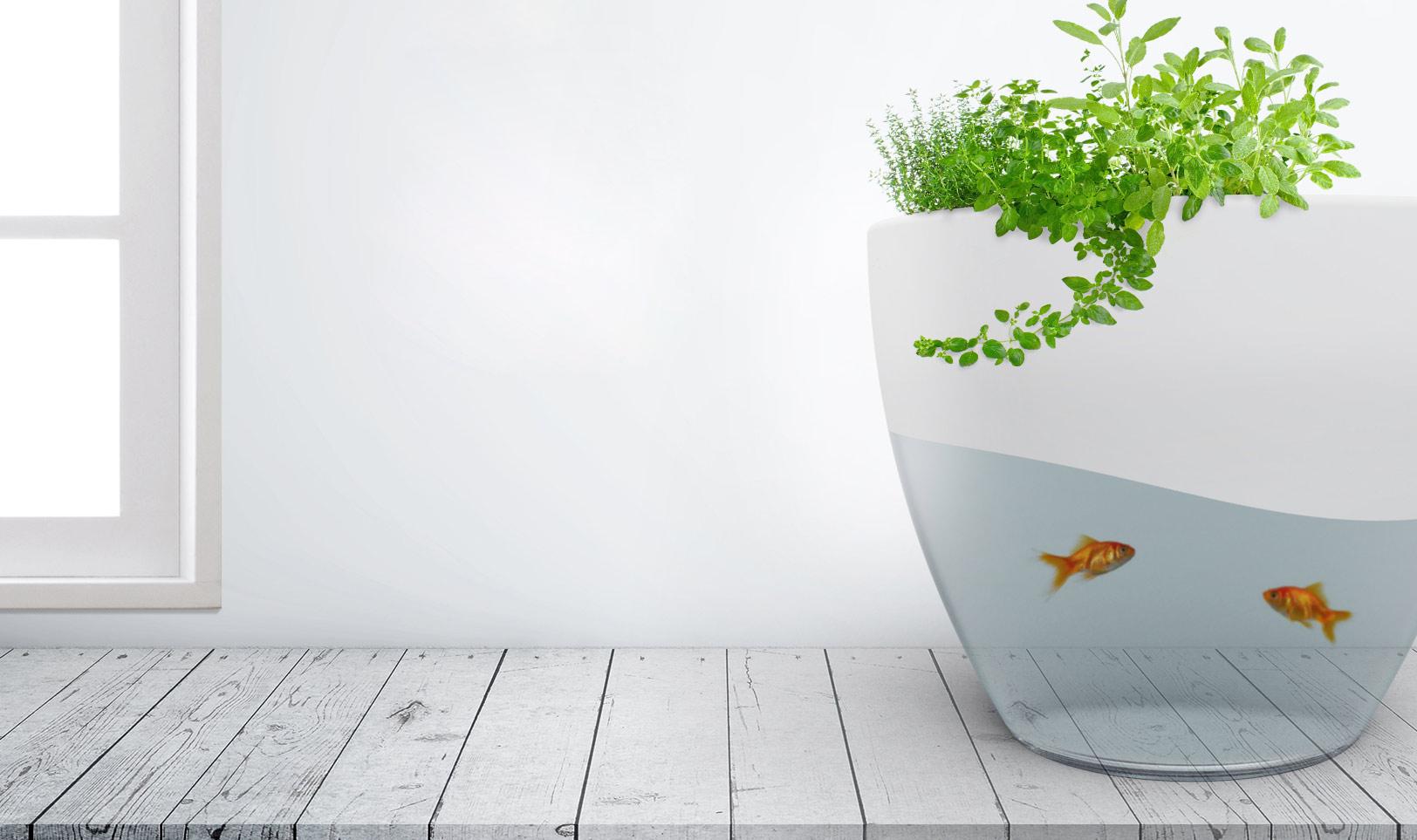 vegua_aquarium_home