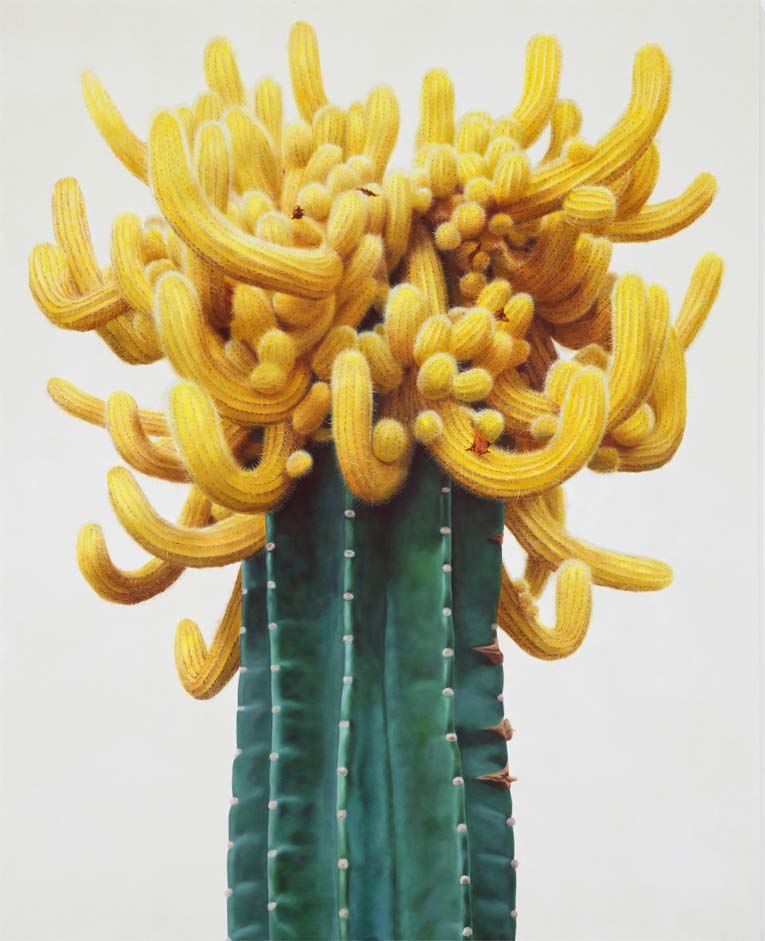 lowcactus-1