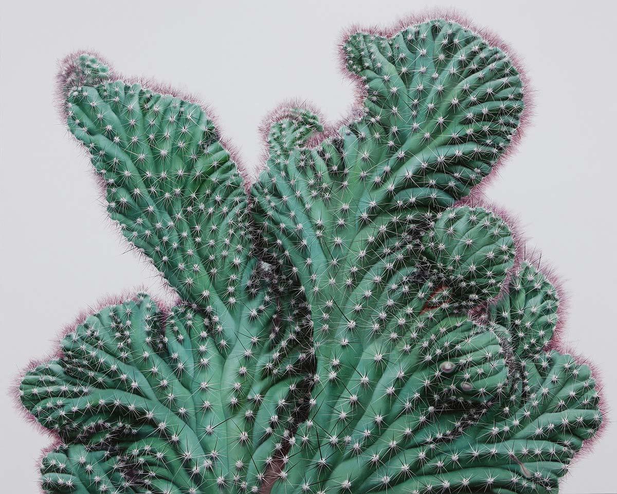 lowcactus4
