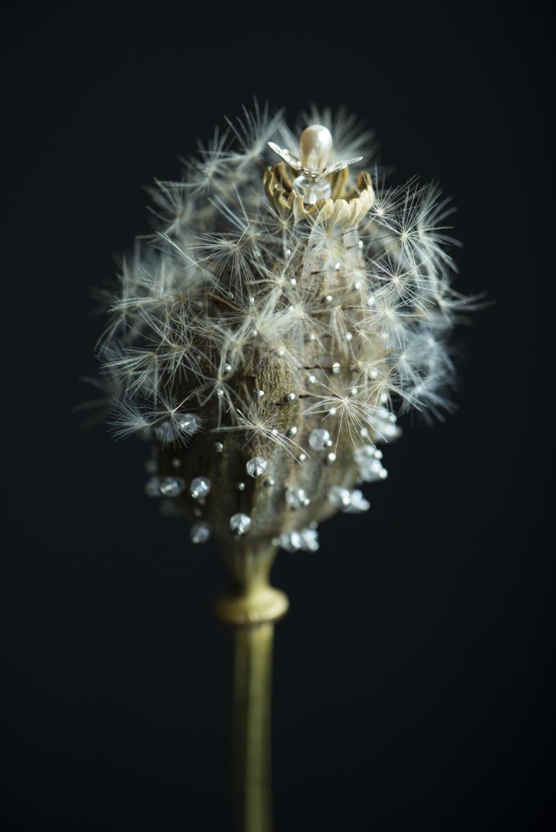 dandelion19