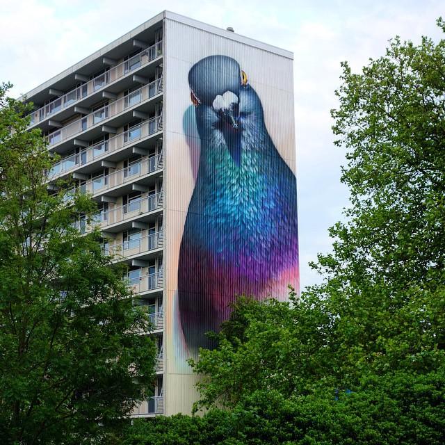 pigeons_peinture_rue_hollande_01