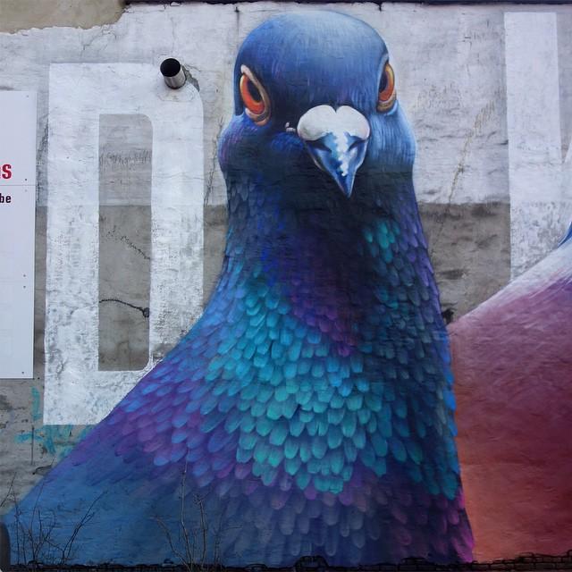 pigeons_peinture_rue_hollande_04