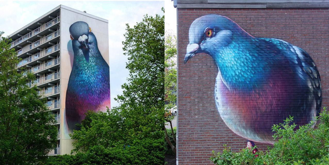 pigeons_peinture_rue_hollande_home