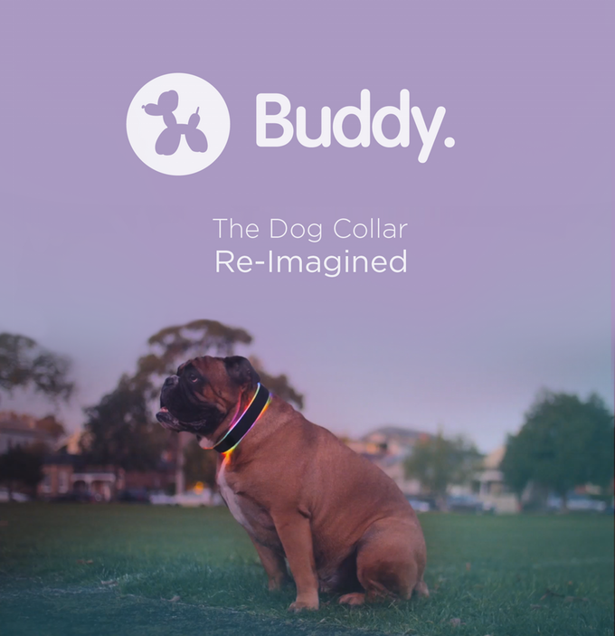 buddy_collier_chien_connecté_01