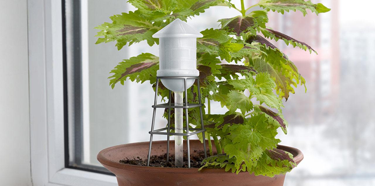 chateau_eau_plantes_home