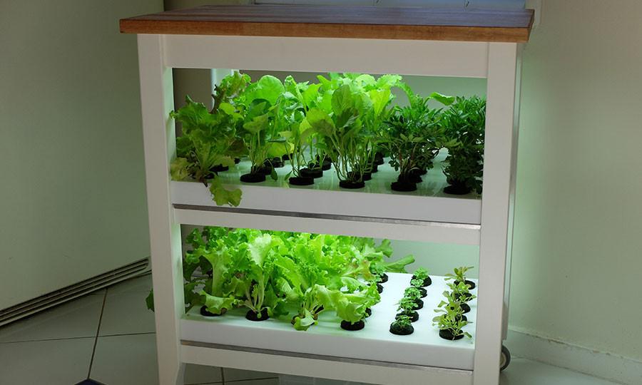 click-and-grow-robot-garden-02