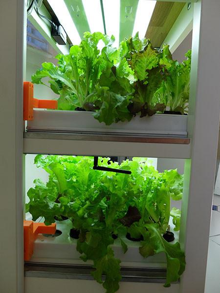 click-and-grow-robot-garden-04