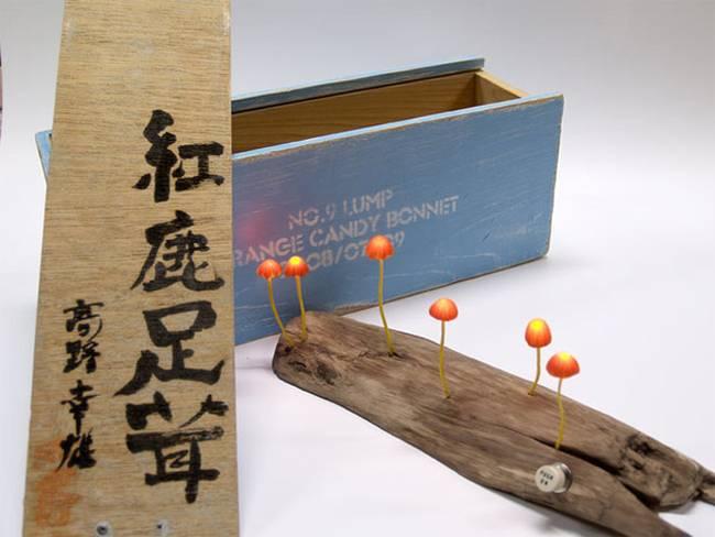 Yukio100