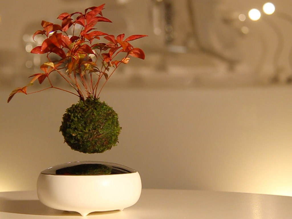 air-bonsai-plante-suspendue-magnetique-cdc-home