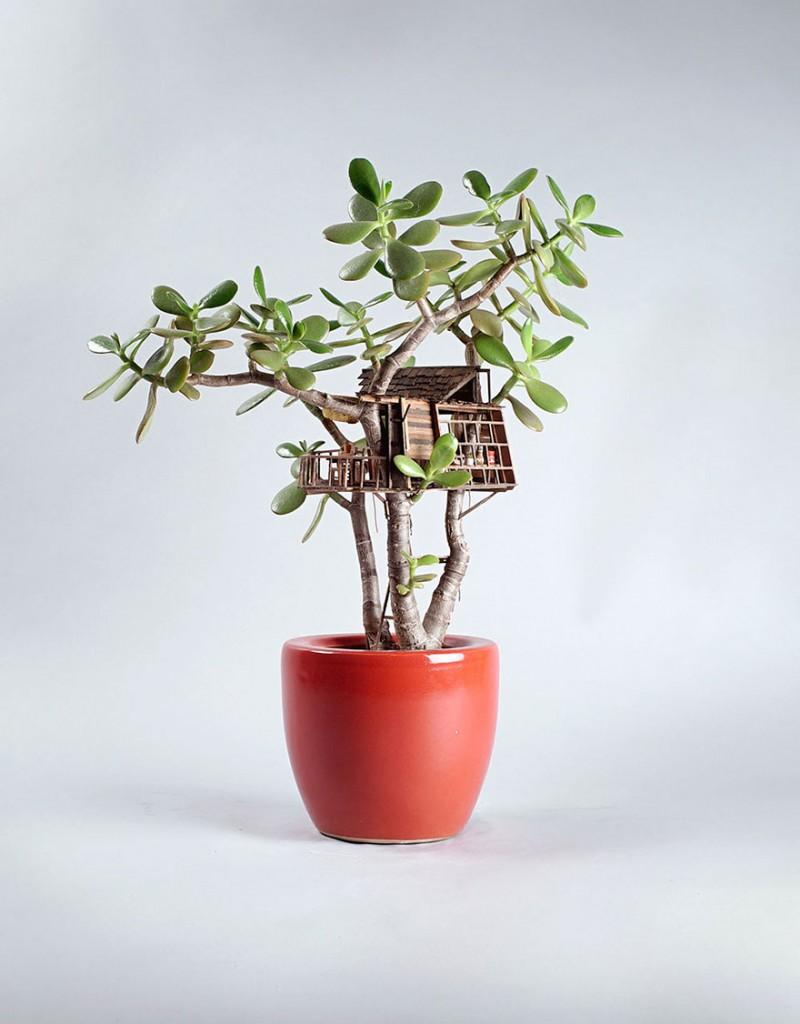 maison miniature plantes intérieure 03