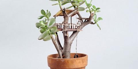 maison miniature plantes intérieure 07