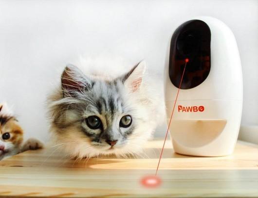 PAWBO11